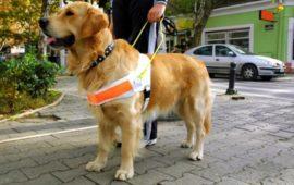 Perros de asistencia y su higiene en terapias asistidas a personas
