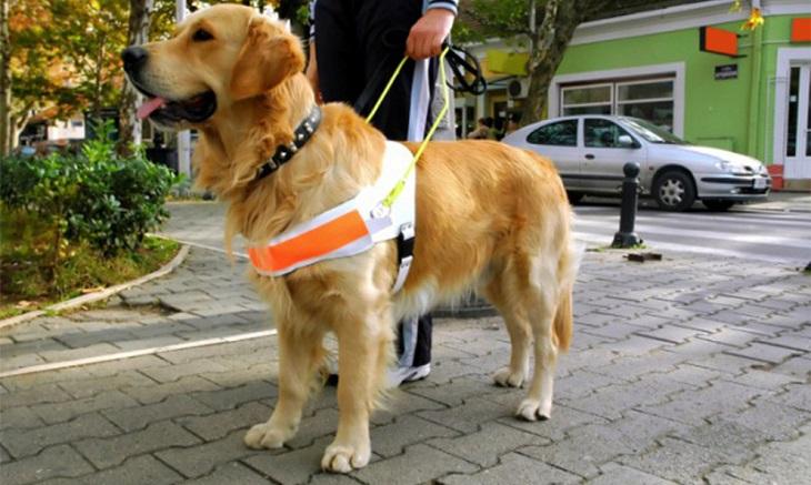Legislación: nueva ley en Andalucía que regula los perros de asistencia