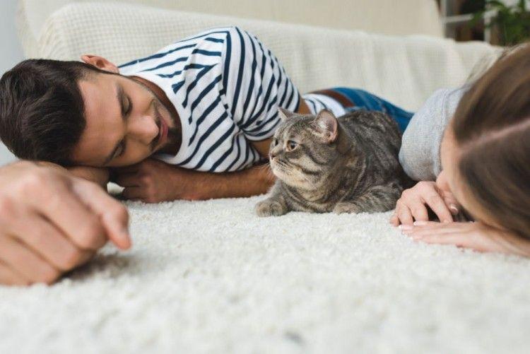 Así te ayuda su perro o gato a vivir más años