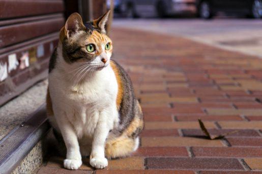 Gato esperando