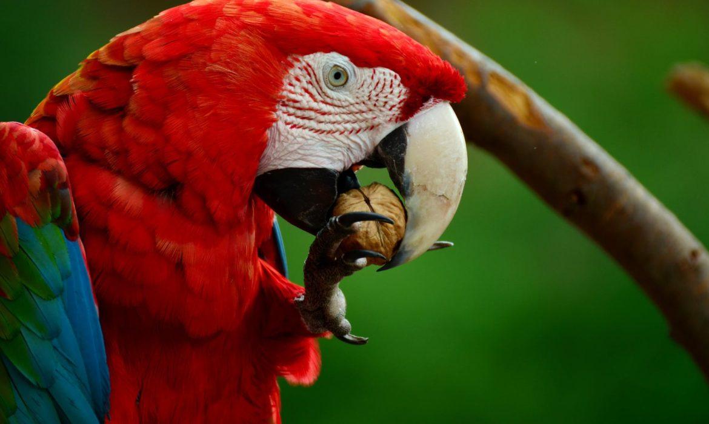 ¿Cuál es la dieta más adecuada para nuestro ave?