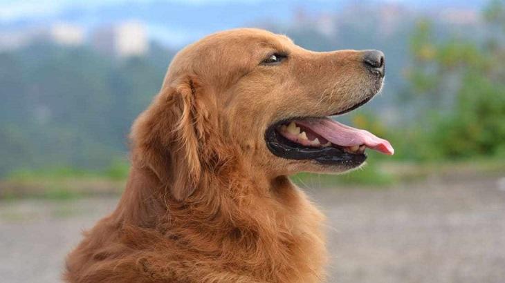Perros genética