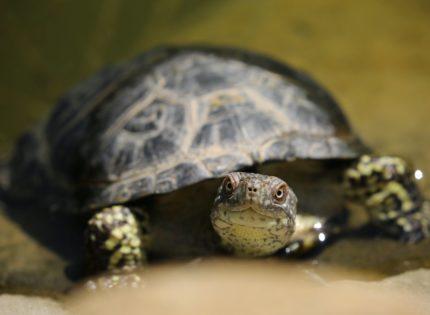 Fracturas en el caparazón de las tortugas