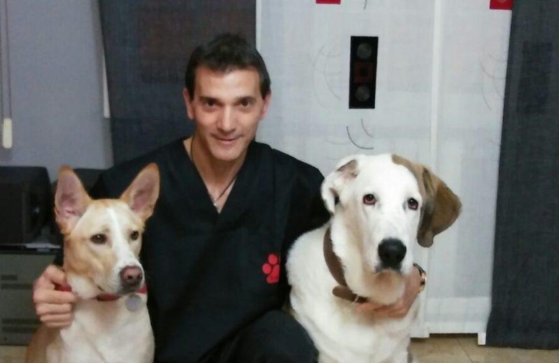 Fisioterapia veterinaria, ¿en qué consiste?