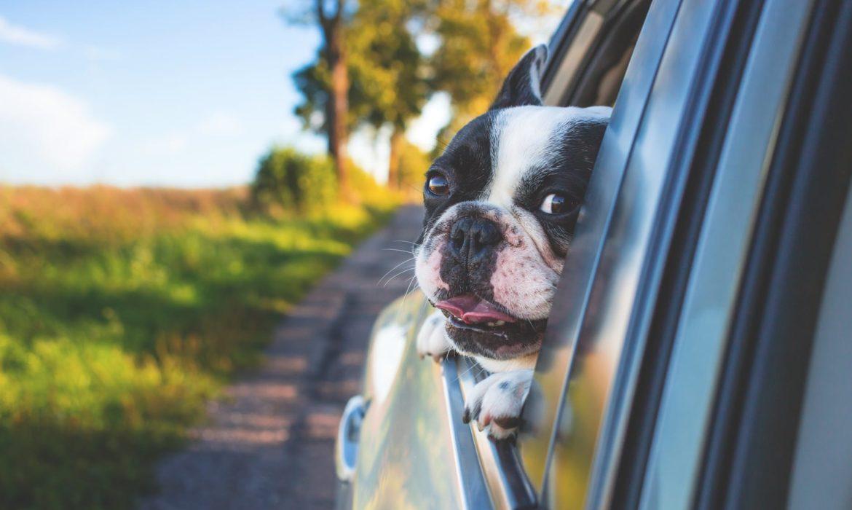 Cómo transportar a nuestra mascota en vacaciones