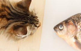 ¿Por qué el aceite de pescado es bueno para tu mascota?