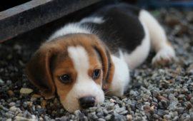 Arranca el Consejo de Protección de Animales de Compañía de Andalucía
