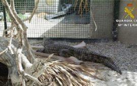 La Guardia Civil desarticula un criadero ilegal de reptiles en Alicante