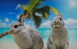 El golpe de calor en pequeños mamíferos