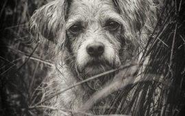 Prohibido abandonar y maltratar a las mascotas