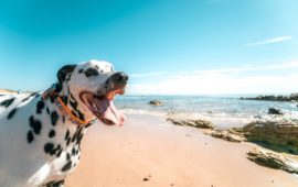 Perros playeros, equipo de supervivencia canina en la arena