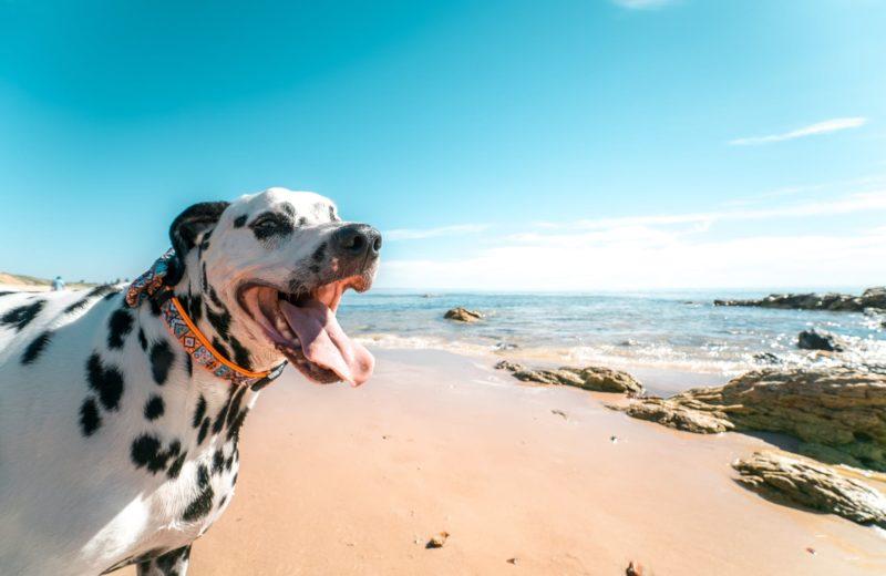 Perro en la playa con sol