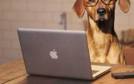 Trabajo de perros: los beneficios de compartir oficina con tu mascota