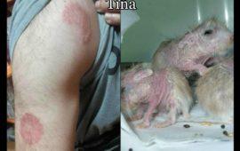 Zoonosis: enfermedades que transmiten a las personas los animales