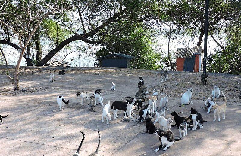 Método T.V.H.R. Una alternativa al método C.E.S. en el control de colonias de gatos ferales