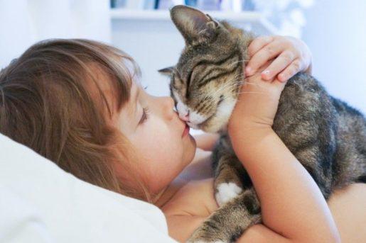 Besar gatos en la boca
