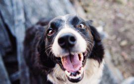 Vitamina D, ¿cómo protege el corazón del perro?
