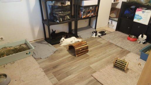 Calidad vida conejos
