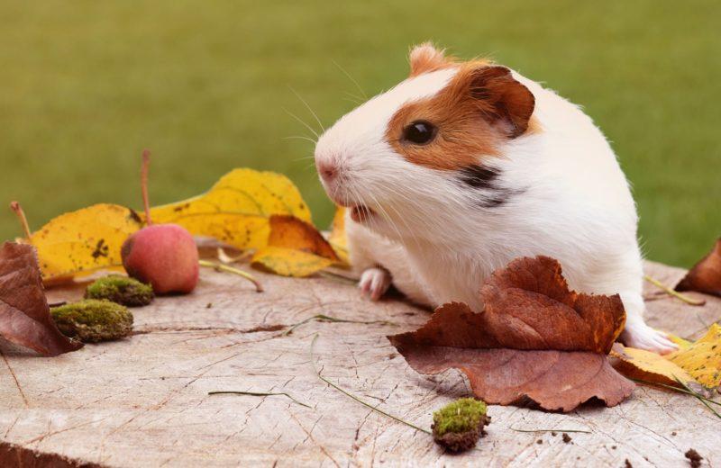 ¿A qué veterinario hay que llevar a los animales exóticos?