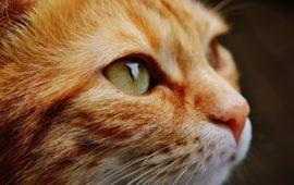 El estrés en los gatos ¿qué lo provoca?