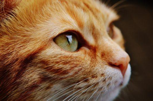 Estrés gatos