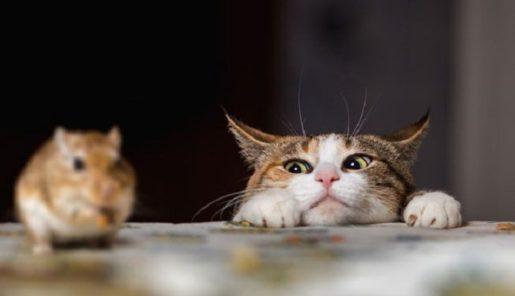 Gatos y ratas