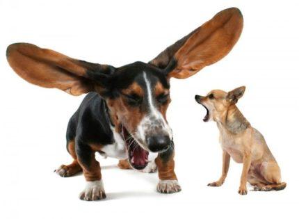 Mi perro no deja de toser, ¿qué le pasa?