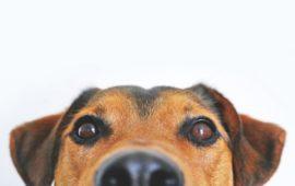 Sudoku para perros: inteligencia canina en forma