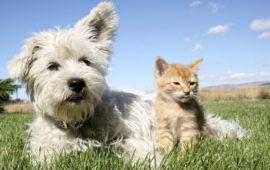 La Comunidad de Madrid destinará ayudas para el cuidado y protección de los animales de compañía