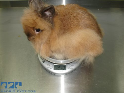 Peso conejos