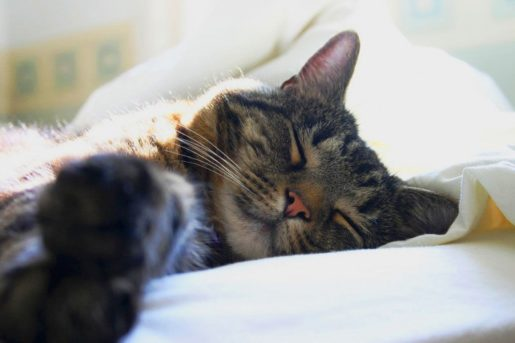 Gatos durmiendo rem