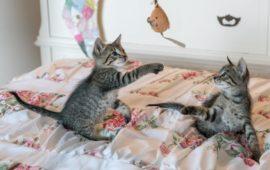 Cuatro juguetes caseros para la mente del gato