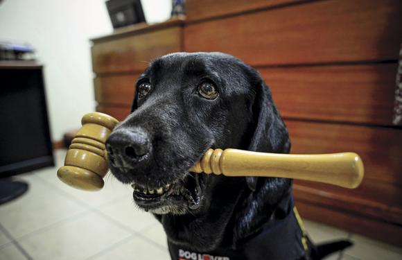 Perro juez