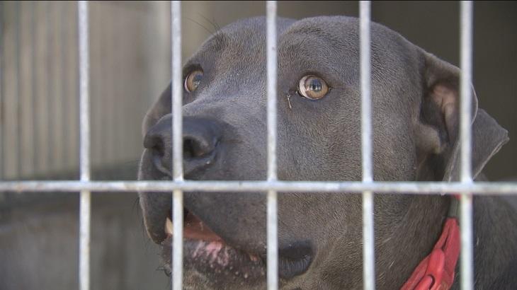 Los animales del Centro de Protección seguirán en la instalación de Parla gracias a un contrato de urgencia