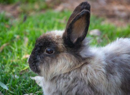 ¿Os habéis preguntado alguna vez cómo ven los conejos?