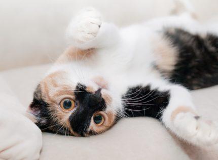 El lenguaje corporal del gato, todo un mundo de información