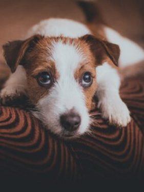 Perro guapo