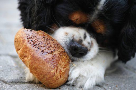 Perro con galleta