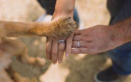 Las terapias con animales, necesidad de regulación