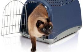 Como habituar un gato al transportín. Paciencia se puede…