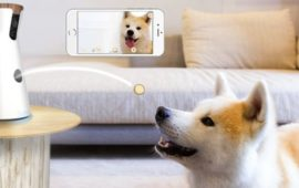 Querido Santa Claus, quiero una cámara Furbo interactiva para perros