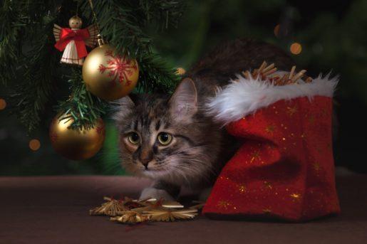 Cuidados invernales gatos - Gato árbol de Navidad