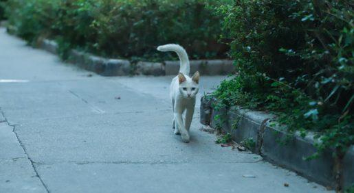Cuidados invernales gatos - Gato en la calle