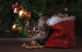 Seis decoraciones navideñas que debes evitar si vives con una mascota