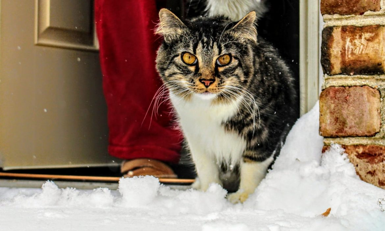 Cuidados invernales en los gatos