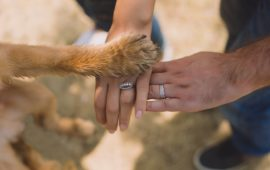 El Congreso empieza las negociaciones para eliminar la 'cosificación' de los animales en el Código Civil