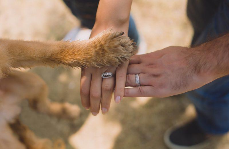 Cosificación mascotas