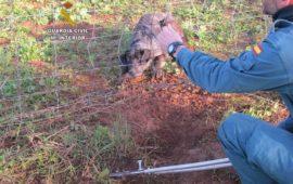 Liberada una perra atrapada por un lazo de caza en una finca de Niebla (Huelva)