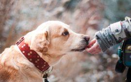 Gran Canaria crea el Pacto por el Bienestar Animal