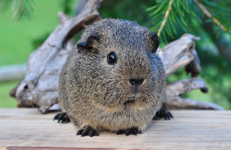 ¿Tu mascota tiene un ligero sobrepeso o padece obesidad?